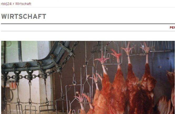 http://www.rbb-online.de/wirtschaft/beitrag/2016/03/wiesenhof-huehner-schlachten-brandenburg.html